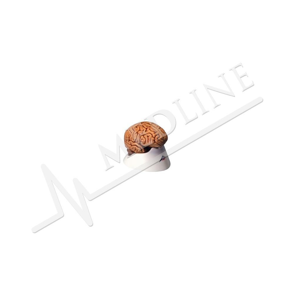 Medline | Klassisches Gehirn, 5 Teile C18