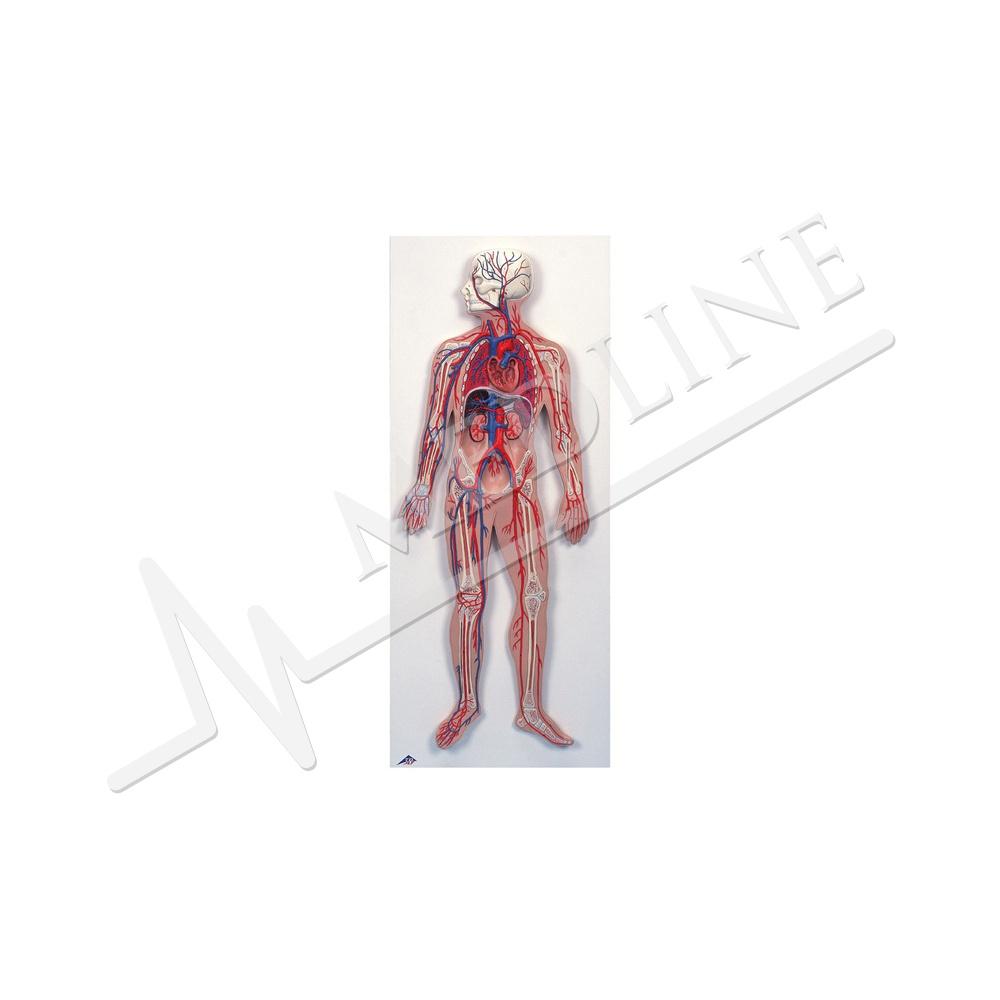 Medline | Kreislauf G30