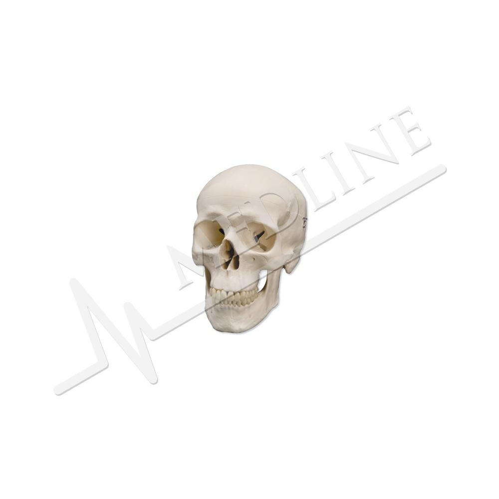 Medline | Klassischer Totenkopf, 3-teilig A20