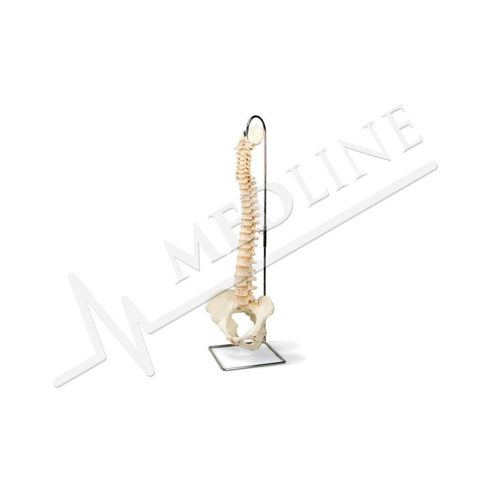 Medline | Bonelike Wirbelsäule A794